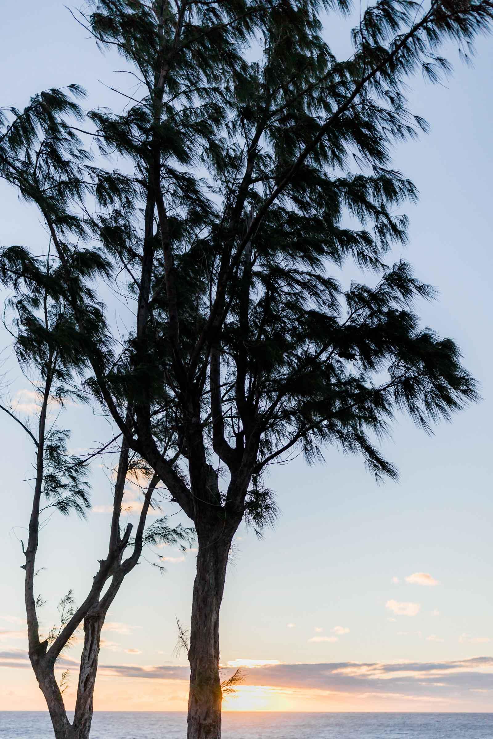 Photographie de Mathieu Dété, photographe de mariage et famille à Saint-Gilles sur l'île de la Réunion 974, présentant un arbre au coucher de soleil en bord de mer à la Pointe au Sel
