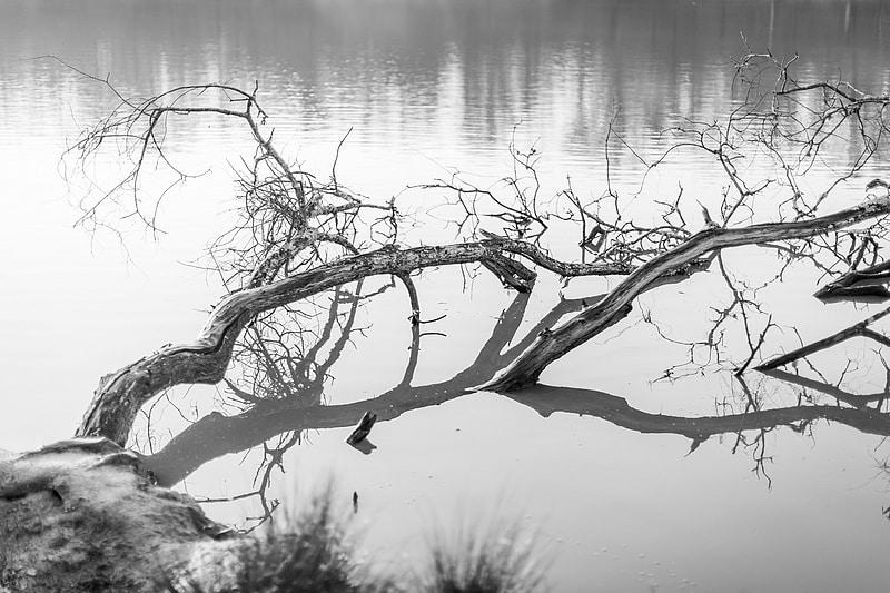 Branche sur un lac - Photographe mariage portrait Toulouse